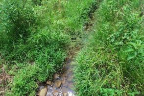 creek-normal