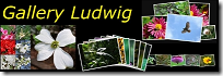 Blog-Logo-GalleryLudwig